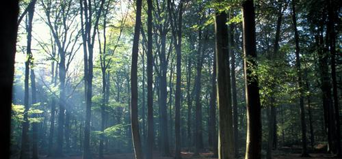 forêt de Flines les Mortagne