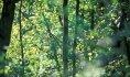 forêt de Raismes-Saint Amand Wallers©Samuel Dhote