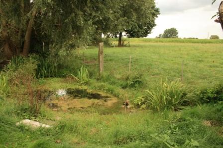 Een vijver in uw tuin pnrse for Klein vijvertje aanleggen